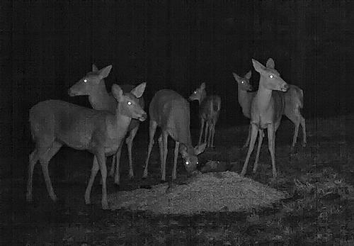 deer0172