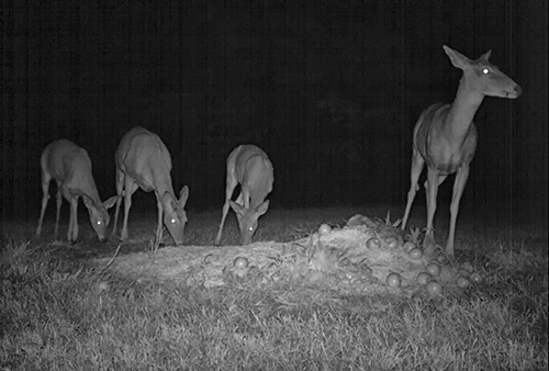 Doe and triplets