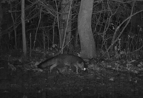 fox2972