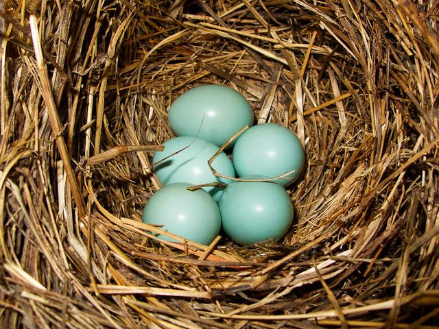 0454-042411 5 eggs