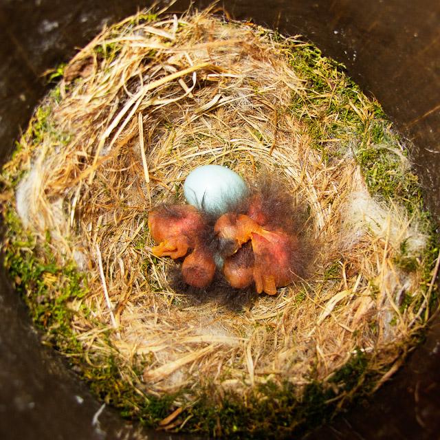 0563-042811_hatchlings