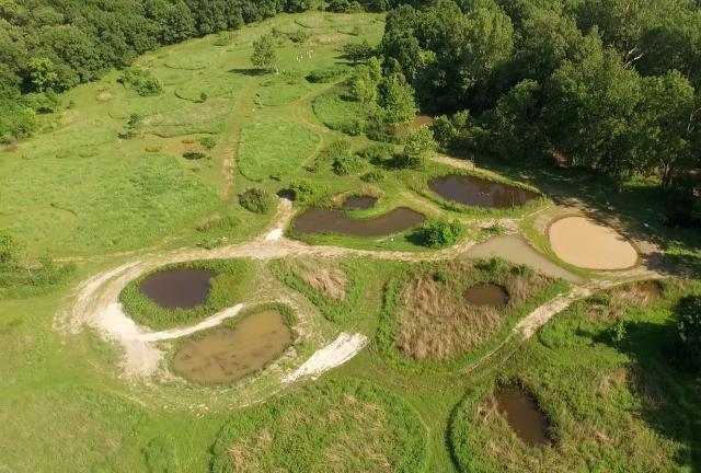 Frog ponds summer 2015